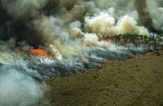 Rừng Amazon tiếp tục bị tàn phá do nạn đốt rừng trái phép