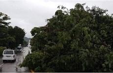 Cuba sơ tán hàng trăm nghìn người do bão nhiệt đới Laura