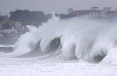 Các nước Đông Á đối phó với ảnh hưởng của bão Maysak