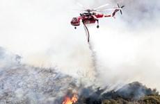 Mỹ: Cháy rừng nghiêm trọng do bắn pháo hoa tại bang California
