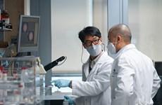 Các hãng dược phẩm Hàn Quốc tăng tốc trong cuộc đua với COVID-19