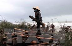 Cần giám sát kỹ vấn đề an toàn hồ đập và trồng bù rừng