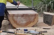 Trung Quốc ngừng nhập khẩu gỗ từ bang Victoria của Australia