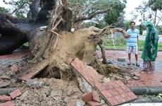 Thừa Thiên-Huế vẫn an toàn sau khi cơn bão số 13 càn quét qua