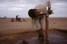 FAO kêu gọi nhanh chóng giải quyết tình trạng thiếu nước trên toàn cầu