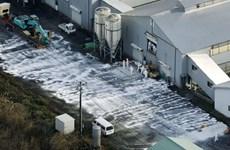 Nhật Bản, Hàn Quốc tăng cường biện pháp ngăn chặn dịch cúm gia cầm
