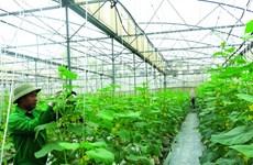 Hải Phòng thúc đẩy phát triển mô hình sản xuất nông nghiệp an toàn