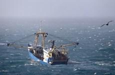 EU duy trì hạn ngạch đánh bắt cá với Anh thêm 3 tháng