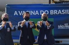 Brazil: Bang Sao Paulo công nhận vắcxin của Sinovac có hiệu quả cao