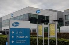 EU cho phép xuất vắcxin đầu tiên của Pfizer sang Nhật Bản