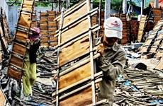 Giá quế Quảng Ngãi tăng mạnh, người dân được mùa