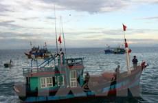 [Video] Phú Yên đóng mới thêm nhiều tàu đánh bắt xa bờ