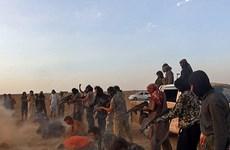 Việt Nam lên án các hành vi bạo lực chống lại thường dân tại Iraq