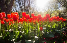 """[Photo] """"Ngất ngây"""" trong Lễ hội hoa lớn nhất Nam bán cầu"""