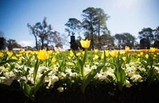 Thủ đô Canberra rực rỡ với Lễ hội hoa lớn nhất Nam bán cầu