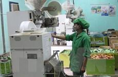 Doanh nghiệp chế biến, xuất khẩu chè chú trọng thị trường nội địa