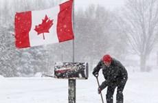 Miền Đông và Nam Canada chuẩn bị hứng chịu bão tuyết lớn