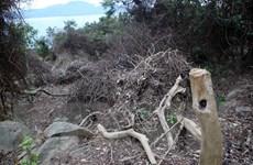 Cách chức lãnh đạo kiểm lâm Sơn Trà-Ngũ Hành Sơn do để phá rừng