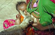 Ngỡ ngàng trước cảnh người phụ nữ cho hươu bú sữa như con