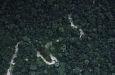 Thỏa thuận hợp tác 6,1 triệu USD giúp Peru bảo tồn rừng Amazon