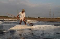 Diêm dân Bạc Liêu phấn khởi vì năm nay muối được mùa, trúng giá