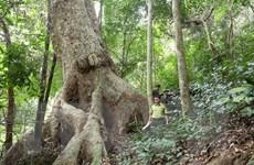 Tỷ lệ che phủ rừng trên toàn quốc tăng 0,24% so với năm 2018