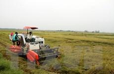 Nông dân Quảng Bình thiệt hại hàng chục tỷ đồng do mưa lớn và gió mạnh