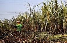 Mỹ gia hạn thêm 5 năm thỏa thuận đình chỉ về mía đường với Mexico
