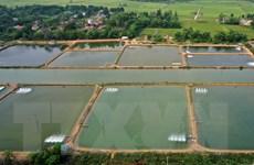 Long An dành 1.244 tỷ đồng phát triển vùng nuôi tôm nước lợ