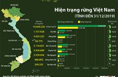 [Infographics] Hiện trạng rừng tại Việt Nam tính đến 31/12/2019