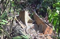 """Điều tra, xử lý nghiêm vụ """"lâm tặc"""" mở đường để phá rừng ở Phú Yên"""