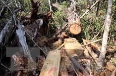 Gia Lai: Điều tra, xử lý nghiêm vụ hủy hoại rừng ở Kbang