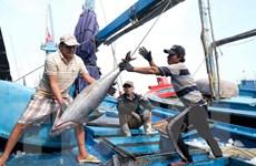 Khắc phục thẻ vàng IUU: Xử lý nghiêm việc khai thác hải sản trái phép