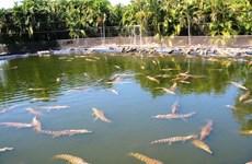 Australia: Hàng chục con cá sấu con bị bắt trộm tại công viên hoang dã