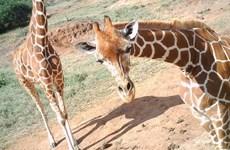 Anh: Sở thú London triển lãm ảnh động vật nhân Ngày quốc tế selfie