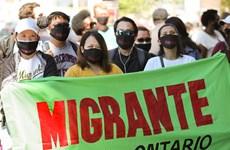 Canada: Lao động di cư kêu gọi chính phủ hỗ trợ trong dịch COVID-19