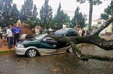 Lâm Đồng: Mưa lớn làm cây bật gốc, đè bẹp xe ôtô đậu ven đường