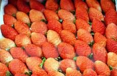 Tạm giữ 3,5 tấn dâu tây nghi hàng Trung Quốc đưa về Đà Lạt tiêu thụ