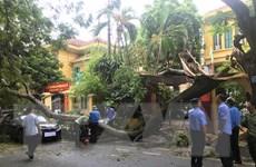 Hải Phòng: Cảnh báo cây xanh đô thị có thể bị gãy đổ trong mùa mưa