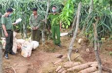 Quảng Bình: Khởi tố vụ mua bán, tàng trữ trái phép hơn 450 kg thuốc nổ