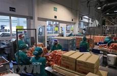 Sputnik: Doanh nghiệp Việt tại Nga vượt khó, xây dựng hình ảnh đẹp
