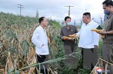 Báo Triều Tiên nêu bật những nỗ lực khôi phục sau 3 cơn bão liên tiếp