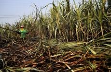 Việt Nam điều tra chống bán phá giá đường mía xuất xứ từ Thái Lan