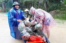 Quảng Bình: Hơn 11.000 ngôi nhà bị ngập, nhiều xã bị chia cắt cục bộ