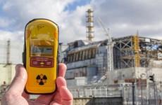 Lượng phóng xạ tại lò phản ứng hạt nhân Chernobyl gây hại cho loài ong
