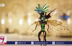 [Video] Độc đáo các tác phẩm nghệ thuật làm từ xác côn trùng