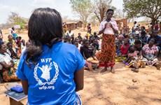Giám đốc điều hành WFP không tới nhận giải Nobel Hòa bình do COVID-19