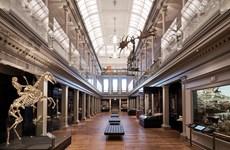 Bảo tàng lâu đời nhất ở Australia chuẩn bị mở cửa đón khách trở lại