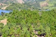 Quản lý bền vững rừng phòng hộ: Thực trạng khó khăn, còn nhiều bất cập