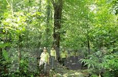 Quản lý bền vững rừng phòng hộ: Hướng phát triển, thu hút nguồn lực